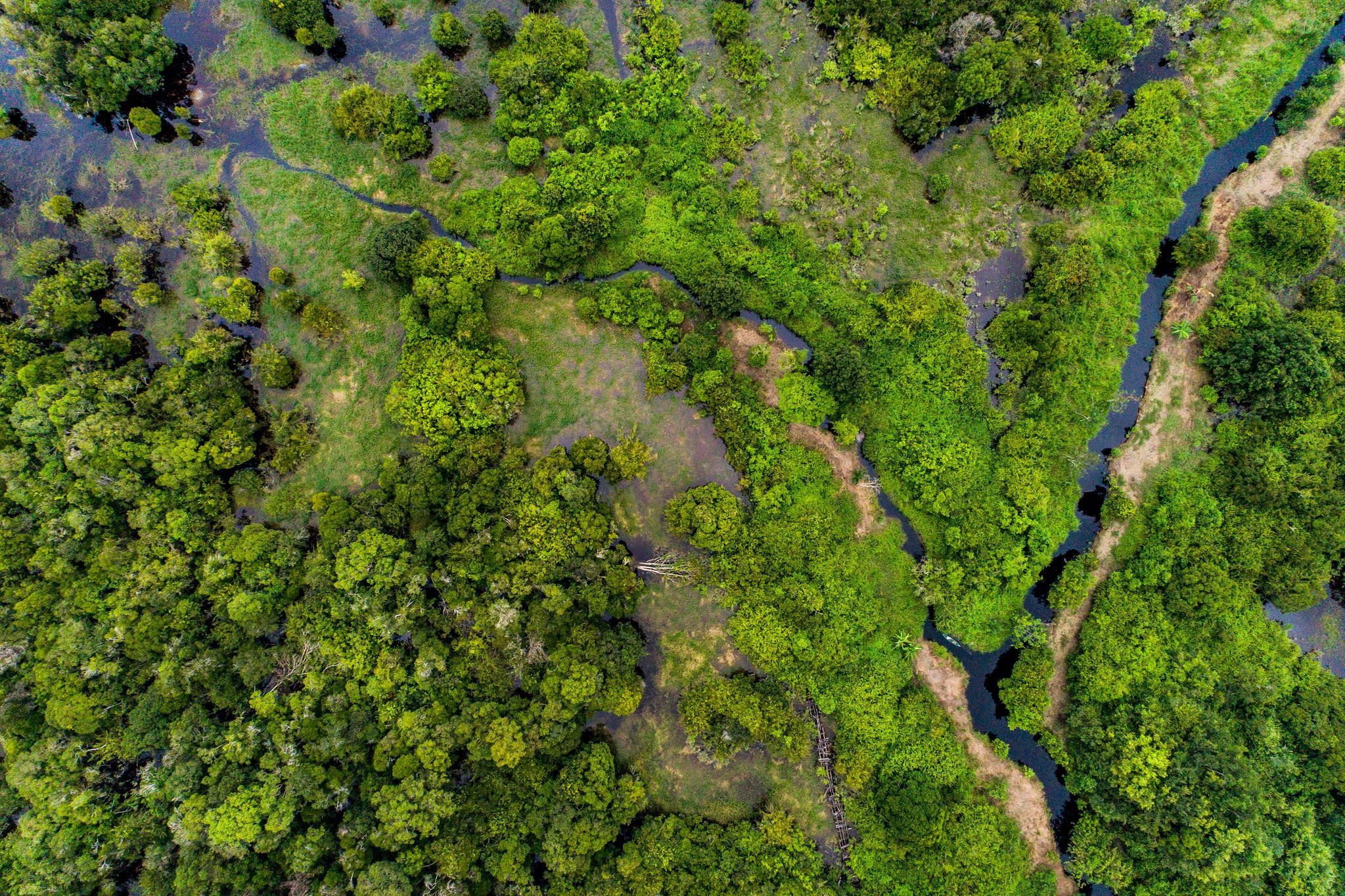 Le foreste, nostre alleate nella sfida climatica
