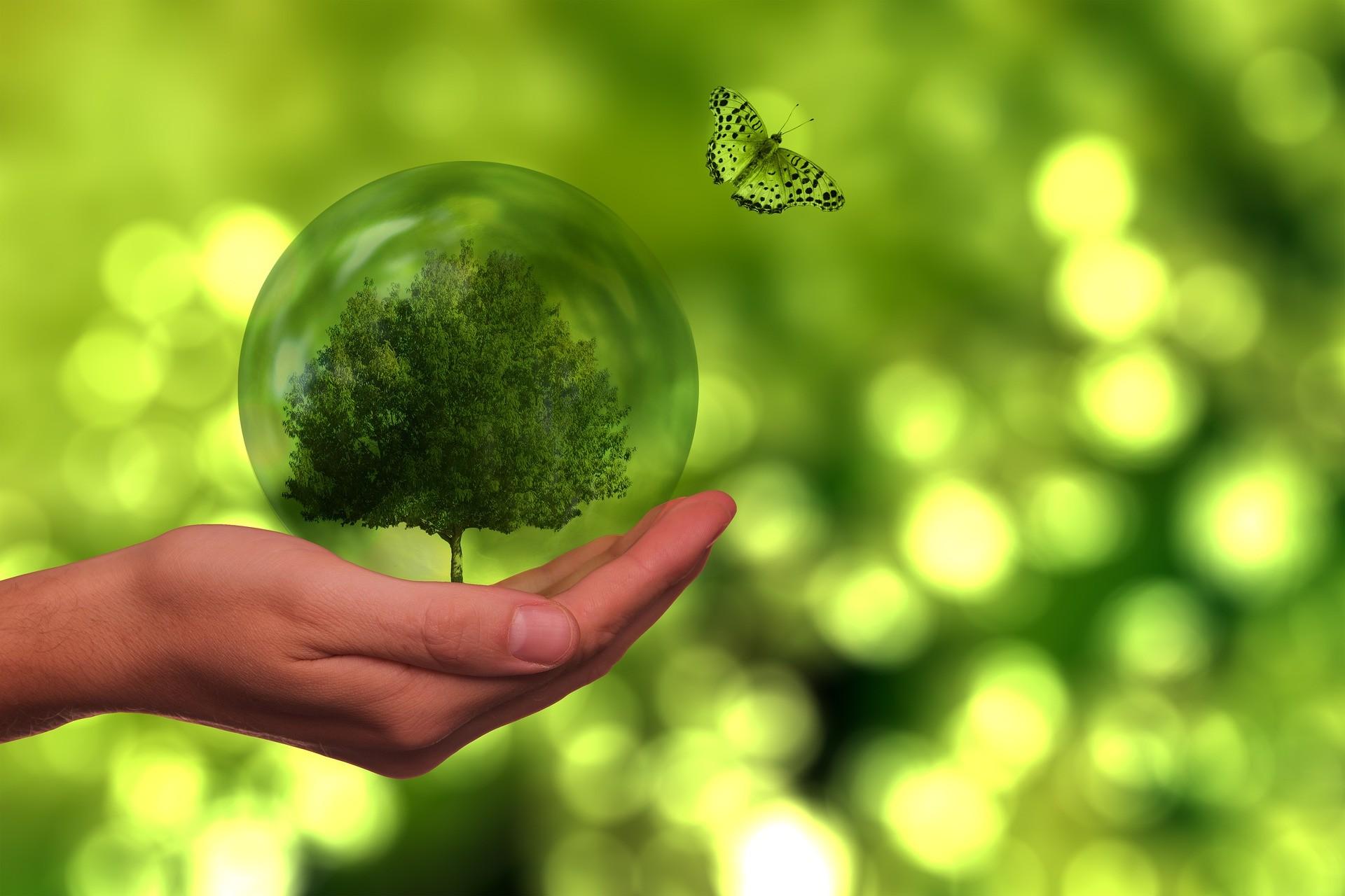 Alimentazione, ambiente e salute: impatti globali e soluzioni locali